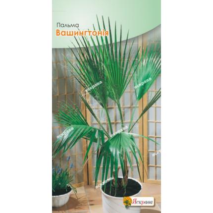 Пальма Вашингтонія (5 насінин в оболонці)