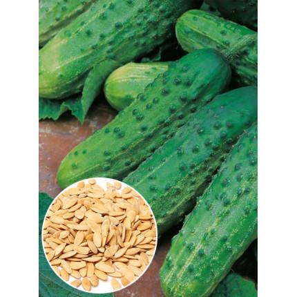 Огурец Юлиан f1 весовой (семена) 1 кг