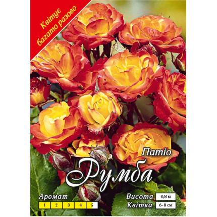 Троянда патіо Румба (контейнер)