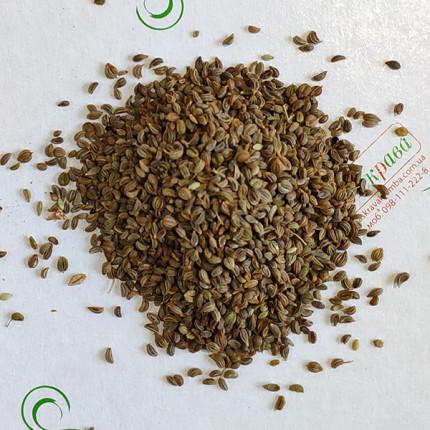 Петрушка Берлинская весовая (семена) 1 кг