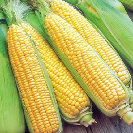 Кукуруза гибрид Розовский F1 1.0 кг