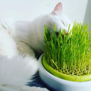 Смесь трав для котов