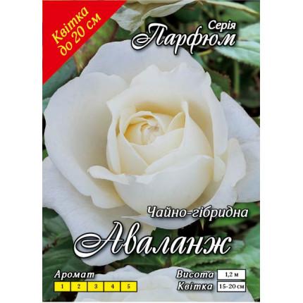 Троянда ч/г Аваланж клас АА