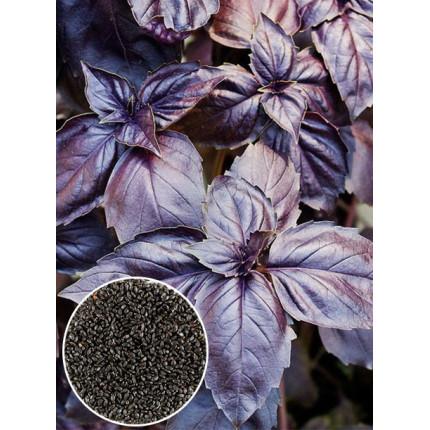 Базилик фиолетовый весовой (семена) 1кг