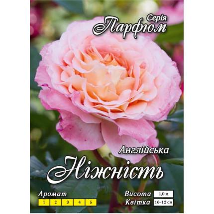 Троянда англійська Ніжність клас А