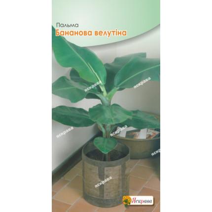 Пальма Бананова Велутіна (висота 0.5-1м) 5 нас в оболонці