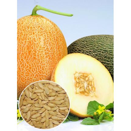 Дыня Карамелька весовая (семена) 1 кг