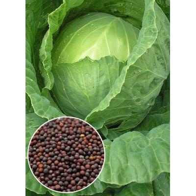 Капуста Суддя вагова (насіння) 1 кг - оптом