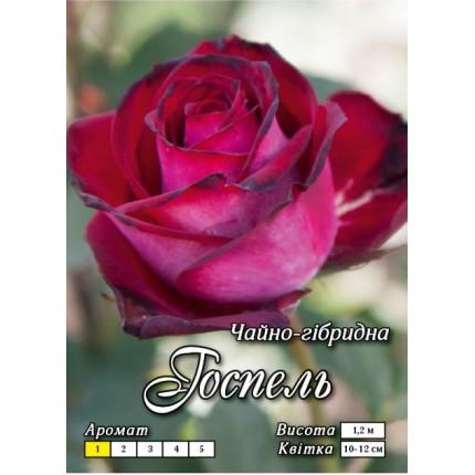 Троянда ч/г Госпель клас АА