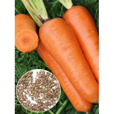 Морква Шантане вагова (насіння) 1 кг - оптом