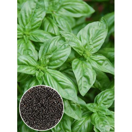 Базилик зеленый весовой (семена) 1 кг