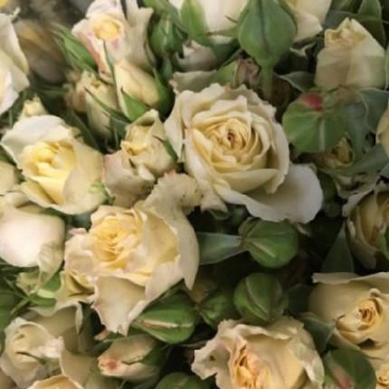 Роза спрей Кремовая (контейнер)