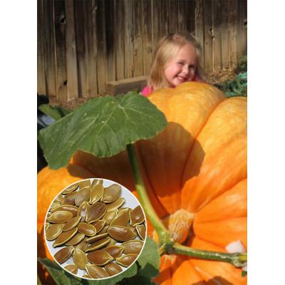 Гарбуз Атлантичний Гігант (насіння) 1 кг - оптом