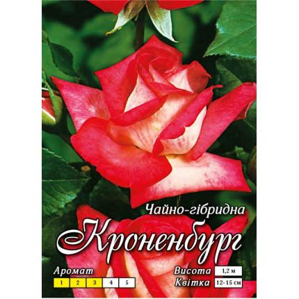 Троянда ч/г Кроненбург (контейнер)