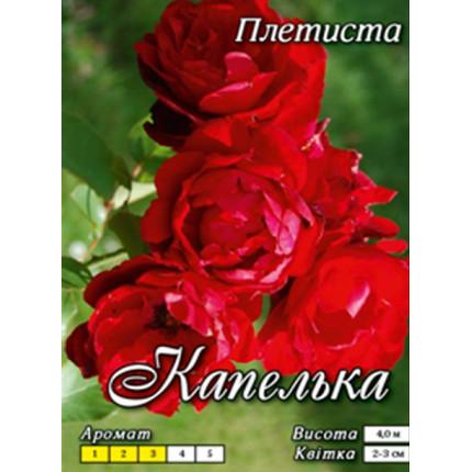 Роза плетистая Капелька класс  А