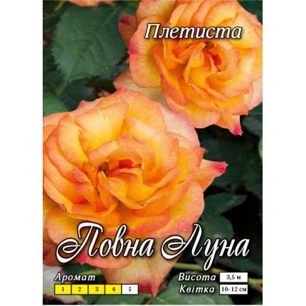 Роза плетистая Полная луна  класс АА