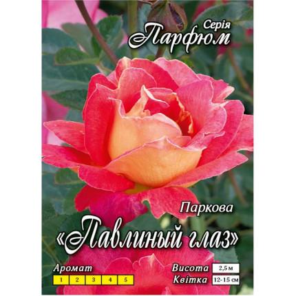 Троянда паркова Павине око  клас А