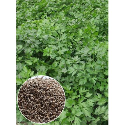 Петрушка Гигант де Италия весовая (семена) 1 кг
