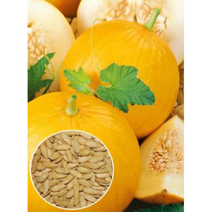 Дыня Золотистая весовая (семена) 1 кг