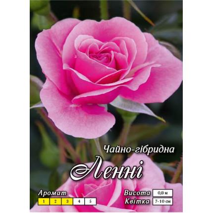 Троянда ч/г Ленні клас АА