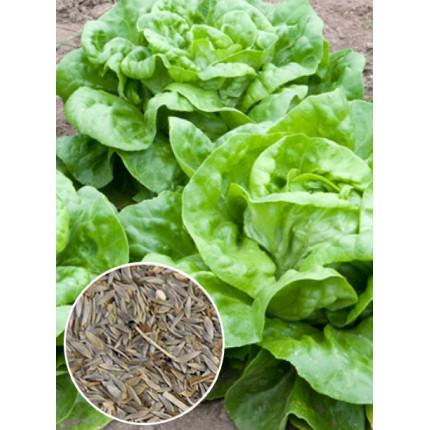 Салат Годар весовой (семена) 1 кг