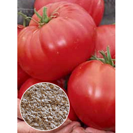Томат Красный великан весовой (семена) 1 кг