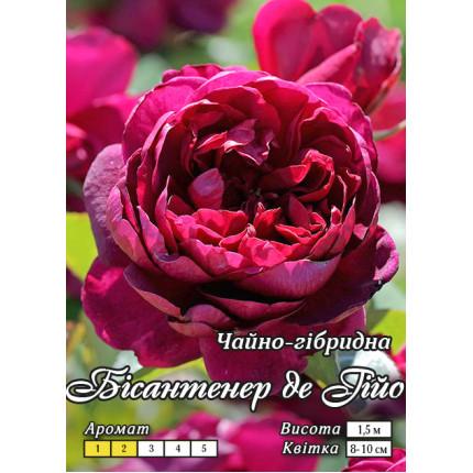 Троянда паркова Бісантенер де Гійо клас А