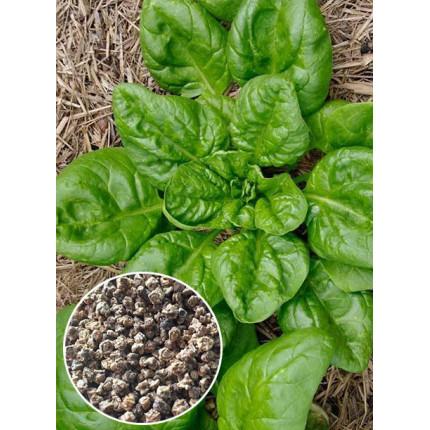 Шпинат Матадор весовой (семена) 1 кг
