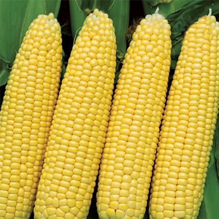 Кукуруза гибрид Любава F1  1.0 кг