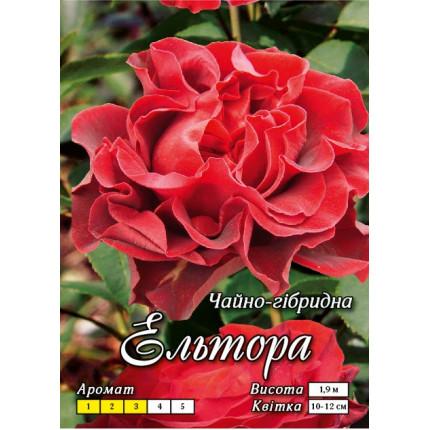 Троянда ч/г Ельтора клас АА