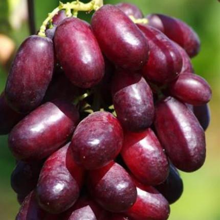 Виноград Ізюминка (контейнер)