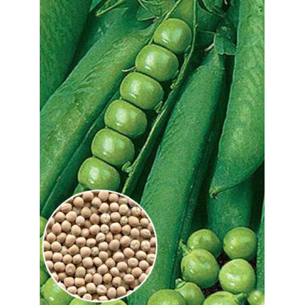 Горох сахарный Женева весовой (семена) 1 кг