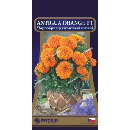 Чорнобривці низькі Antigua Orange  F1 5 нас в оболонці