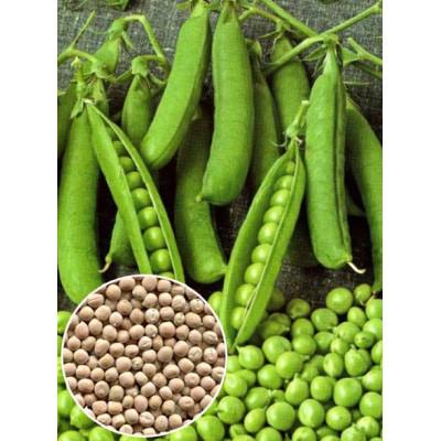 Горох цукровий Фаворит ваговий (насіння) 1 кг - оптом