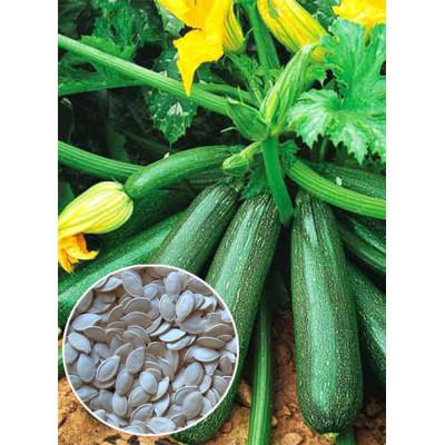 Кабачок Аеронавт ваговий (насіння) 1 кг - оптом
