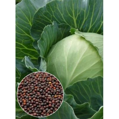 Капуста Українська осінь вагова (насіння) 1 кг - оптом
