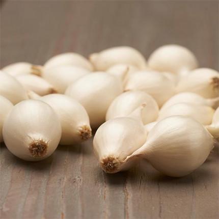 Лук севок White Globe (Белый глобус) 10/21 0.5 кг