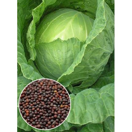 Капуста Судья весовая (семена) 1 кг