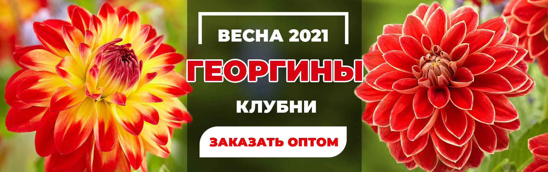 Весна 2021 Георгины