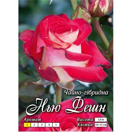 Троянда ч/г Нью Фешн (контейнер)