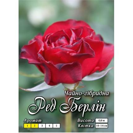 Троянда ч/г Ред Берлін (контейнер)