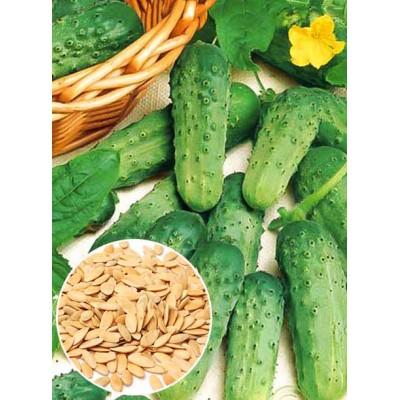 Огірок Паризький корнішон ваговий (насіння) 1 кг - оптом
