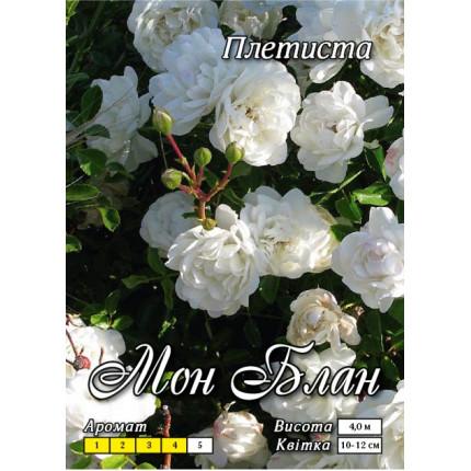 Троянда плетиста Мон Блан клас А