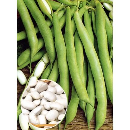 Квасоля кущова Файний Ясь вагова (насіння) 1 кг