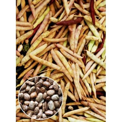 Квасоля Перепілочка вагова (насіння) 1 кг