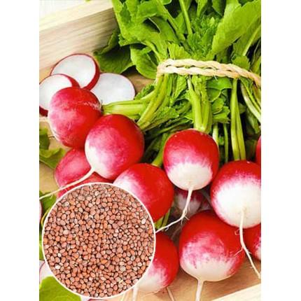 Редис Красный с белым кончиком весовой (семена) 1 кг