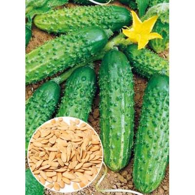 Огірок Голубчик f1 ваговий (насіння) 1 кг - оптом