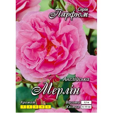 Троянда англійська Мерлін клас А