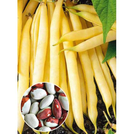 Квасоля Червона Шапочка вагова (насіння) 1 кг