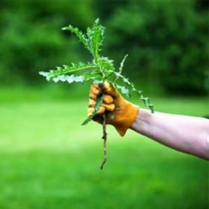 Средства защиты от сорняков (гербициды) Syngenta